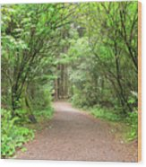 Hiking Trail Along Lewis And Clark River Wood Print