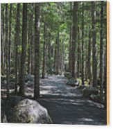 Hiking Trail At Brandywine Falls Provincial Park Wood Print