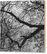 Hiking Trail Fall 2017 7 Bw Wood Print
