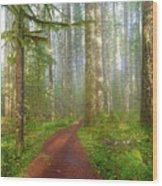 Hiking Trail In Washington State Park Wood Print