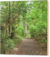 Hiking Trail Through Forest Along Lewis And Clark River Wood Print
