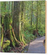 Hiking Trail Through Forest In Lynn Canyon Park Wood Print
