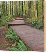 Hiking Trail Wood Walkway In Lynn Canyon Park Wood Print