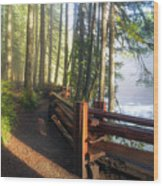 Hiking Trails At Lower Lewis River Trail Wood Print