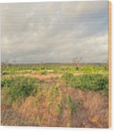 Hill Country Memories Wood Print