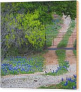 Hill Country Road Wood Print