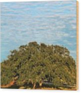 Hill Country Tree  Wood Print