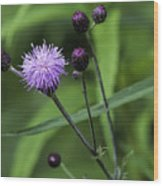 Hill's Thistle Flower And Buds Wood Print