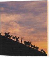 Hillside Elk Wood Print