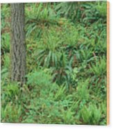 Hillside Ferns Wood Print