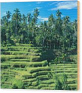 Hillside In Indonesia Wood Print