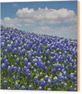 Hillside Texas Bluebonnets Wood Print