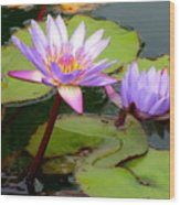 Hilo Water Lily 2 Wood Print