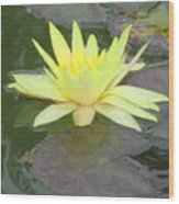 Hilo Water Lily 4 Wood Print
