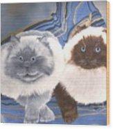 Himalayan Cats  Wood Print
