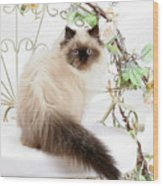 Himalayan Kitten Wood Print