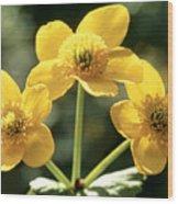 Himalayan Marsh Marigold Wood Print