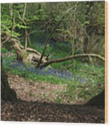 Hint Of Buebell Wood Print