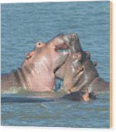 Hippo Playtime Wood Print