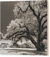 Historic Drayton Hall In Charleston South Carolina Live Oak Tree Wood Print by Dustin K Ryan