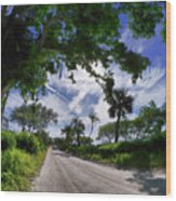 Historic Jungle Trail Vero Bch Fl V Wood Print