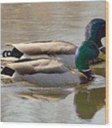 Two Mallards Swimming Quietly Wood Print