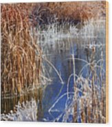 Hoar Frost On Reeds Wood Print