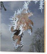 Hoarfrost On Oak Leaves Wood Print