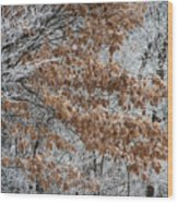 Hoarfrost Trees Wood Print