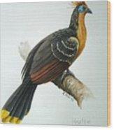 Hoatzin Wood Print