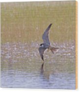 Hobby Skimming Water Wood Print