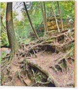 Hocking Hills Ohio Old Man's Gorge Trail Wood Print
