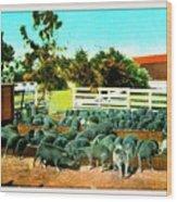 Hog Farm At The Hotel Potter, Santa Barbara Ca, 1905 Wood Print