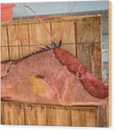 Hog Fish 02 Wood Print