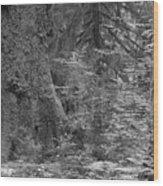 Hoh Rain Forest 3369 Wood Print