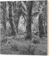 Hoh Rain Forest 3371 Wood Print