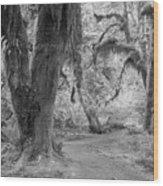 Hoh Rain Forest 3378 Wood Print