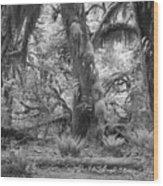 Hoh Rain Forest 3381 Wood Print