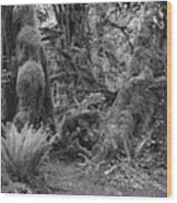 Hoh Rain Forest 3389 Wood Print