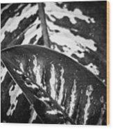 Hoja De La Suerte Wood Print