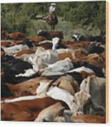 Holding The Herd Wood Print