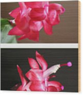 Holiday Cactus - Day And Night Wood Print