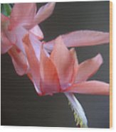 Holiday Cactus - Gliding Wood Print