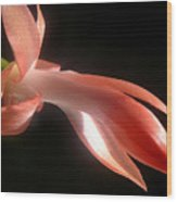 Holiday Cactus - In Silhouette Wood Print