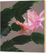 Holiday Cactus - On Wings Wood Print