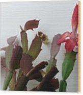 Holiday Cactus 4 Wood Print