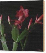 Holiday Cactus Blooms Wood Print