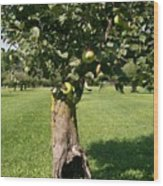 Hollow Apple Tree Wood Print