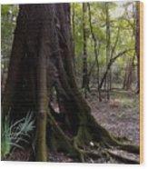 Hollow Wood Print