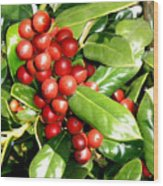 Holly In Summer Wood Print